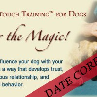 dogTrainings-400×200 copy