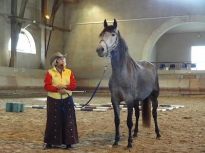 The initial posture of the young Andalusian mare.  High headed and tense in the back.
