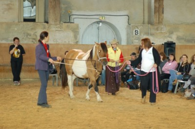 Chest line driving is an invaluable tool for helping horses overcome fears of things behind and around them.