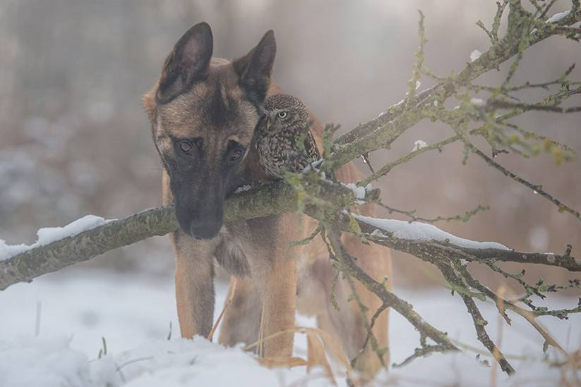 """Brandt describes the relationship between Ingo and Poldi as somewhat of a 'protector-protected' relationship. Ingo is a guardian for Poldi, whom Brandt states """"doesn't know how to live free""""."""