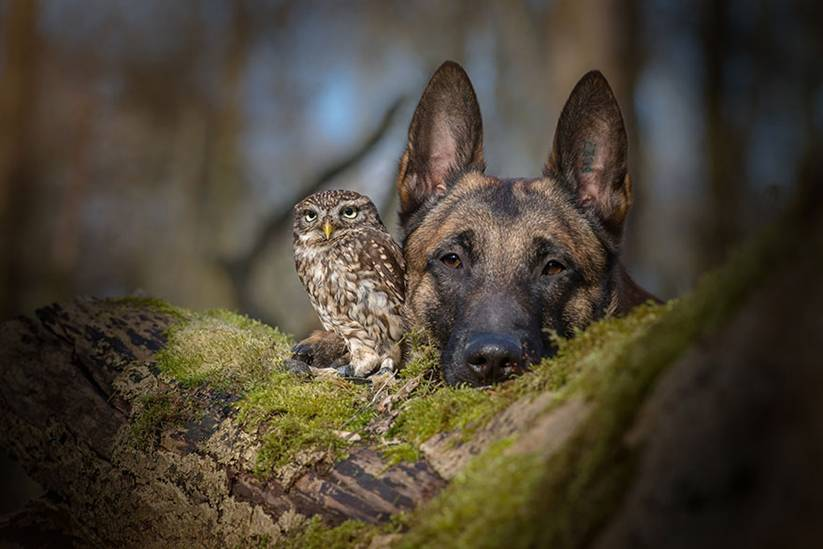 Poldi and Ingo are both pets of Brandt's, and have formed a bond over the past year that the photographer simply couldn't ignore.