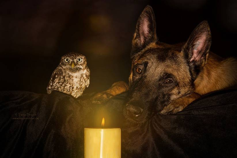 Poldi didn't hatch until two days after his six brothers and sisters, and has always been very vulnerable due to his size. Ingo, on the other hand, comes from a family of strong and oftentimes ruthless police dogs.