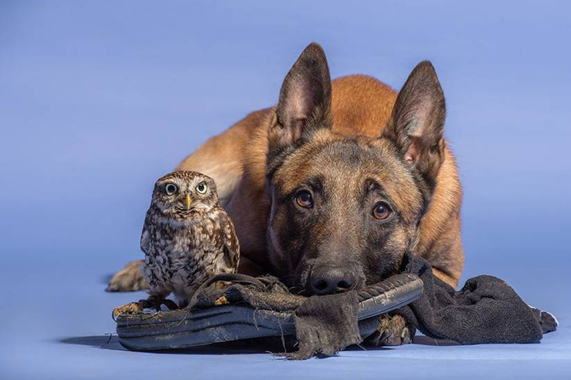 Ingo is often photographed with various birds (such as the Harris hawk) and other animals, but he doesn't share a bond with anyone quite like he does with Poldi.