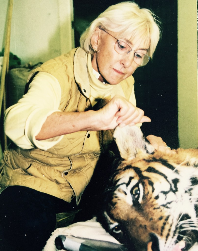 It is possible that Ear TTouch saved this tiger's life